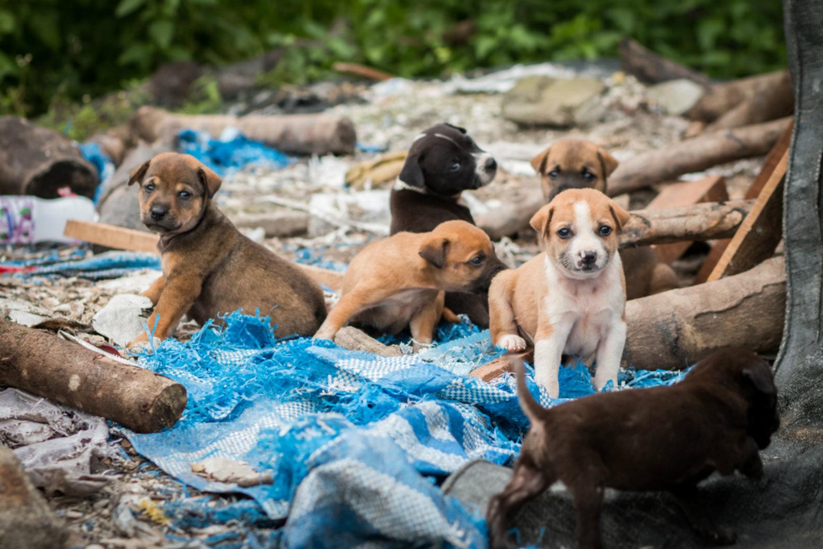 Cairo's stray dogs pose urban challenge | Enterprise